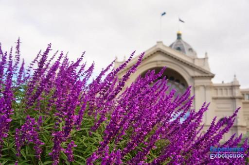 カールトン庭園から王立展示館を望む