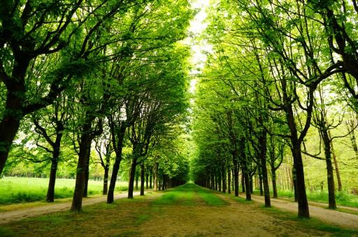 宮殿北側の森